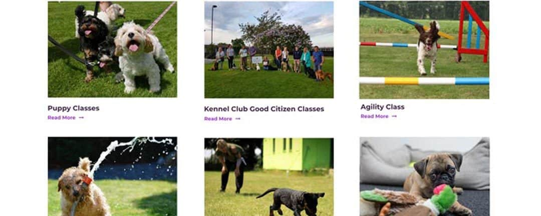 Courses Available At Hounds With Hannah